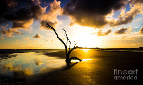 Photograph - The Driftwood Tree Folly Beach by Donnie Whitaker