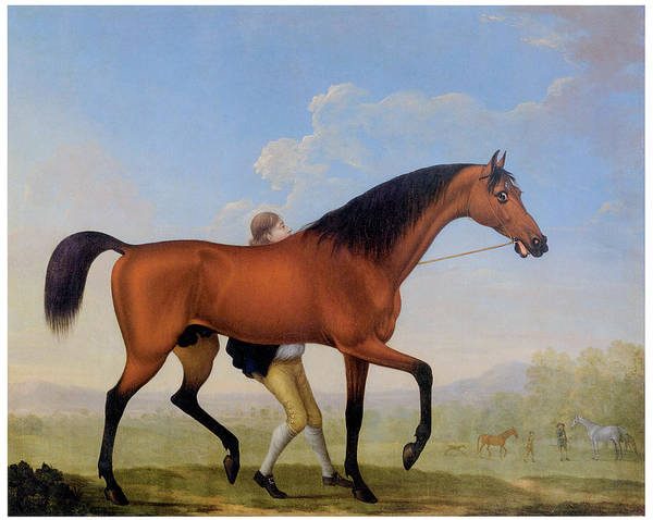Breeding Painting - The Duke O Ancaster's Bay Stallio by William Shaw