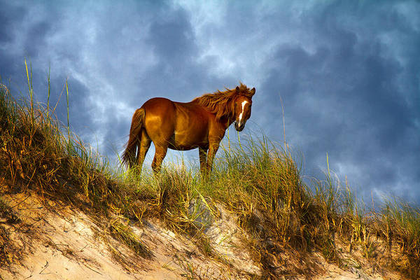 Ponies Photograph - The Dune King by Betsy Knapp