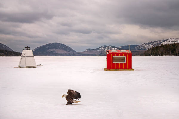 Photograph - The Eagle Has Landed by Darylann Leonard Photography