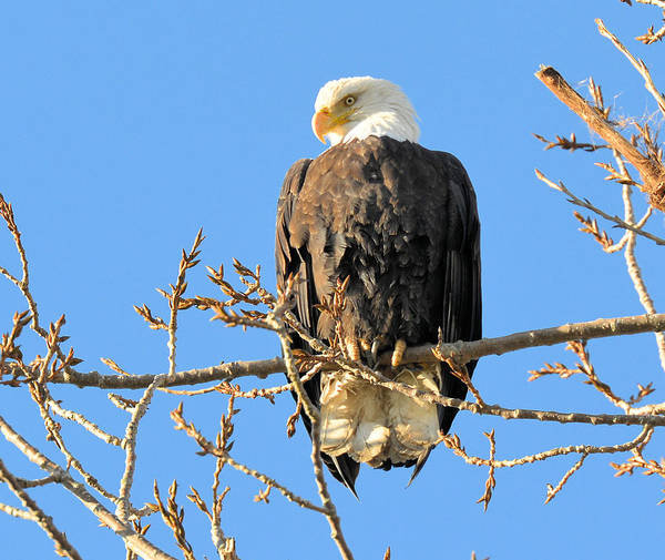 Photograph - The Eagle Has Landed by Lawrence Christopher