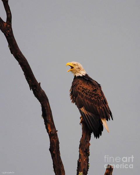 Photograph - The Eagle's Cry by Jai Johnson