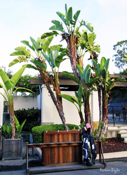 Photograph - The Early Arrival At Montecito Country Club by Barbara Snyder