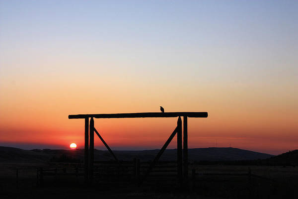 Photograph - The Early Bird At Sunrise by Gerry Bates