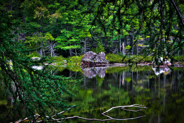 Photograph - The East Shore Of Sis Lake by David Patterson