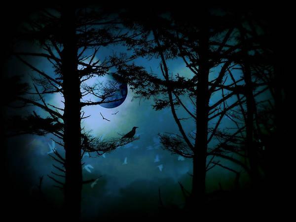 Photograph - The Edge Of Twilight  by Micki Findlay