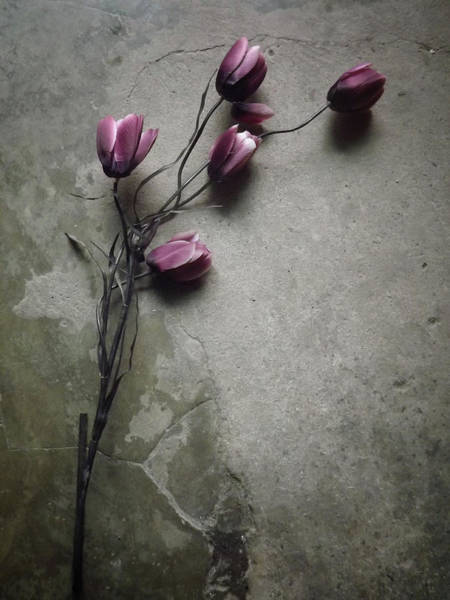Wall Art - Photograph - The Elegant Tulip by Kahar Lagaa
