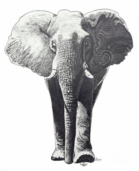 African Animal Drawing - The Elephant by Kean Butterfield