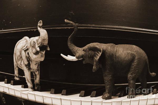 The Elephant Walk Art Print
