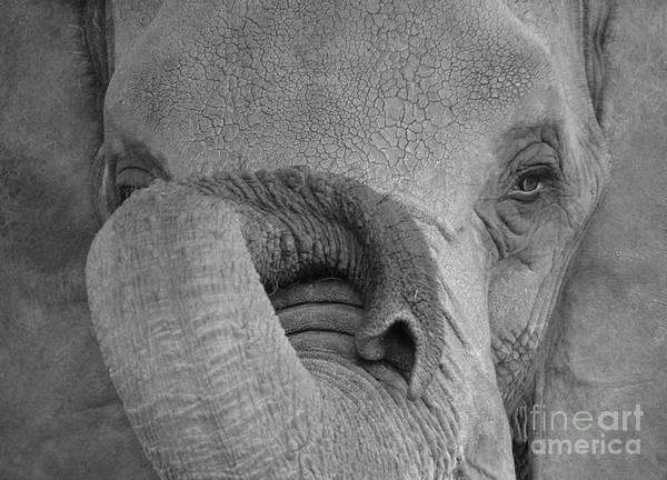 Photograph - The Elephant's Eye by Randy J Heath
