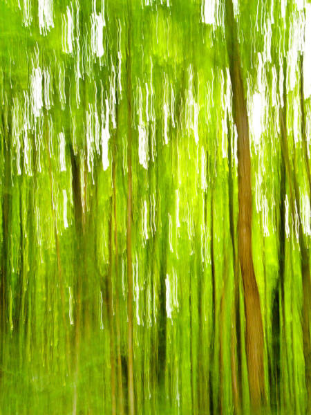 Hardwood Photograph - The Emerald Forest by Bill Gallagher