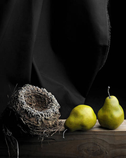 Wall Art - Photograph - The Empty Nest by Krasimir Tolev