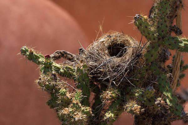 Empty Nest Wall Art - Photograph - The Empty Nest by Parker Bradley