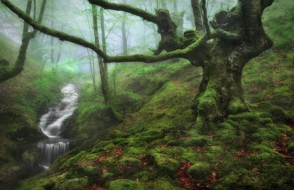 Water Fall Photograph - The Enchanted Forest by Fran Osuna