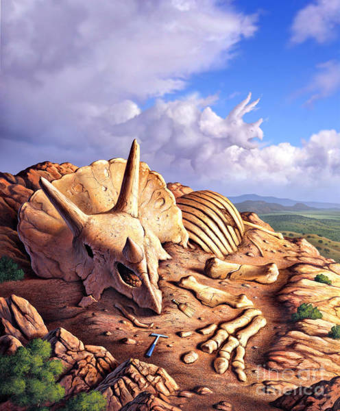 Mound Digital Art - The Exposed Bones Of A Triceratops by Jerry LoFaro
