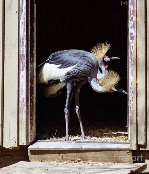Photograph - The Exterminators by Mary Lou Chmura