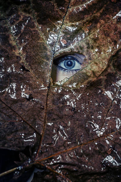 Trough Wall Art - Photograph - The Eye by Joana Kruse