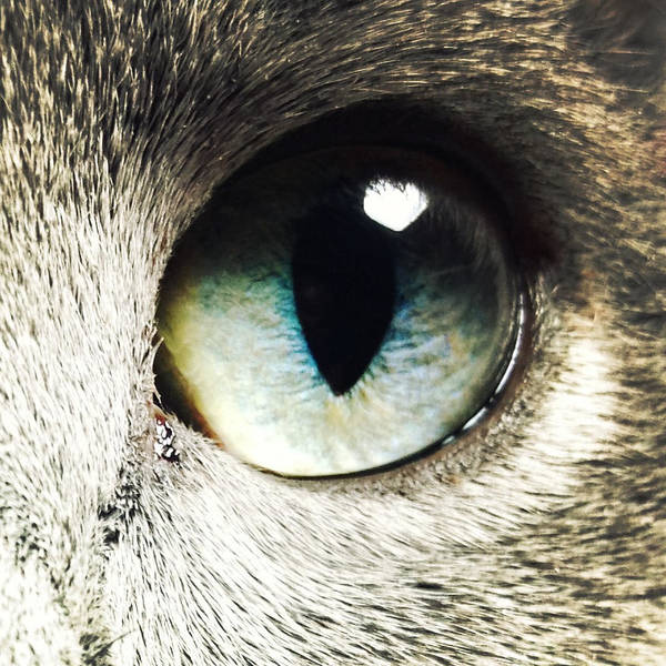 Photograph - The Eye Of The Russian Blue by Natasha Marco