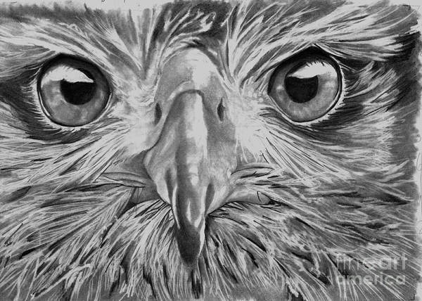 Drawing - The Eyes Are On You by Bill Richards