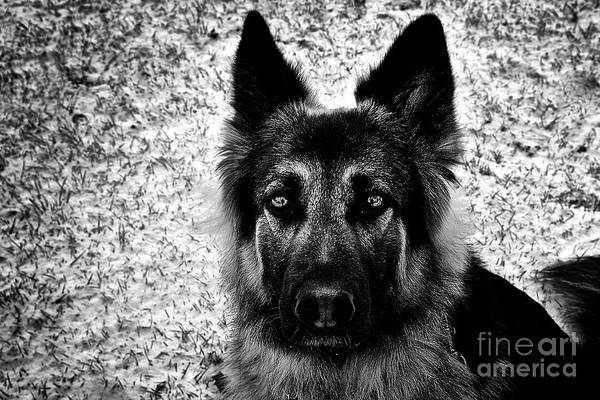 Photograph - The Eyes by Frank J Casella