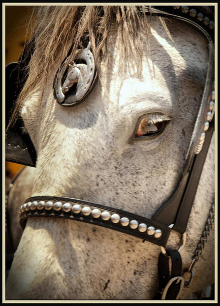 Photograph - The Eyes Have It by Barry Weiss