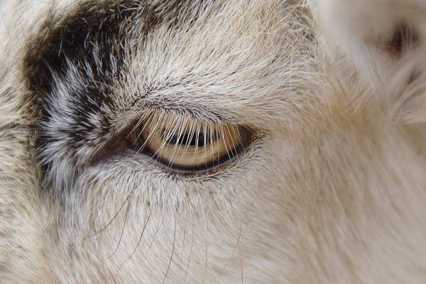 Photograph - The Eyes Have It by Marilyn Wilson