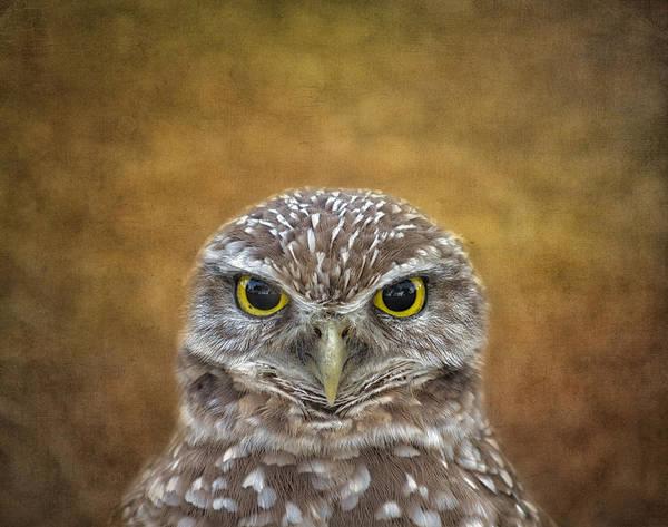 Photograph - The Eyes Say It All by Kim Hojnacki