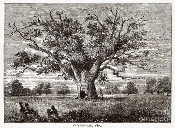 Royal Oak Photograph - The Fairlop Oak, Hainault Forest, 1800 by Middle Temple Library