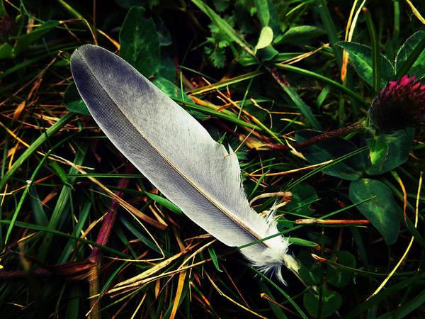 The Fallen Feather Art Print