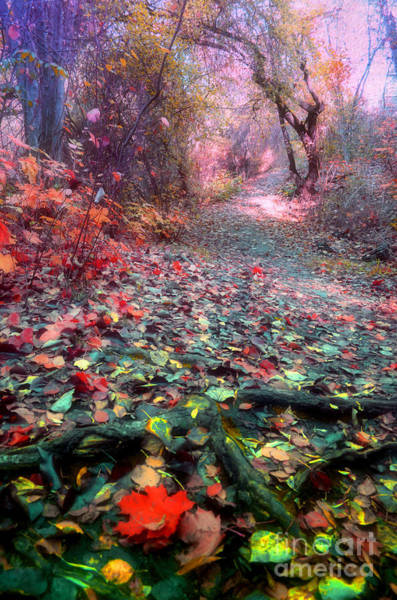 Photograph - The Fallen Leaves by Tara Turner