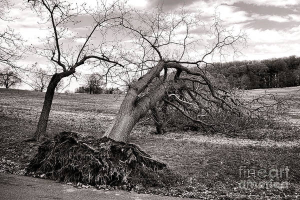 Fallen Tree Photograph - The Fallen by Olivier Le Queinec