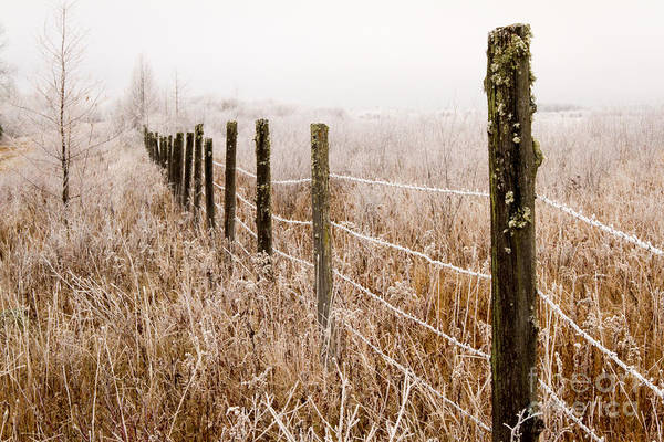 The Fence Still Stands Art Print