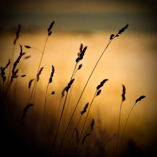 Photograph - The Field by Dave Bowman