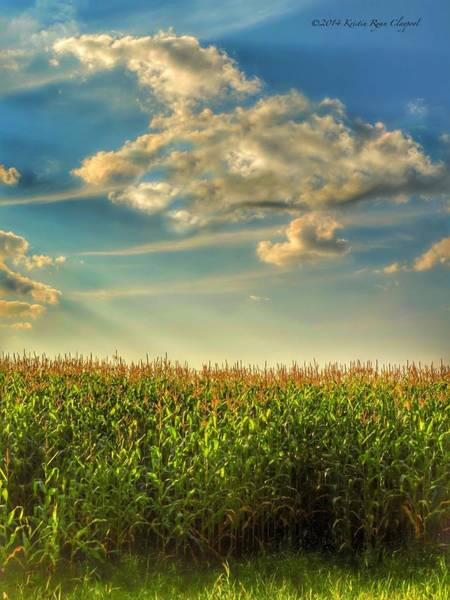 Wall Art - Photograph - The Field Of Corn by Kris  Ryan Claypool