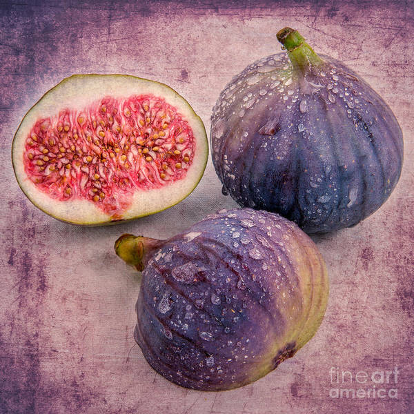 Photograph - the fig II  by Hannes Cmarits
