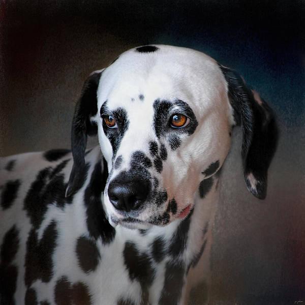 Photograph - The Fireman's Dog - Dalmatian by Jai Johnson