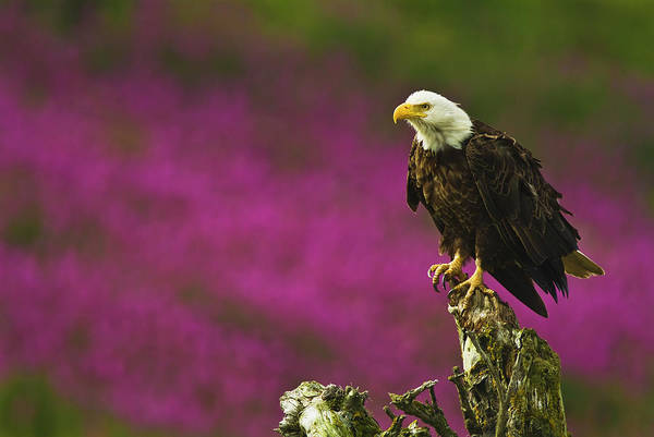 Bird In Tree Photograph - The Fireweed Epilobium Leucocephalus In by Brian Guzzetti / Design Pics