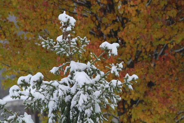 Photograph - The First Snow by Dan Sproul