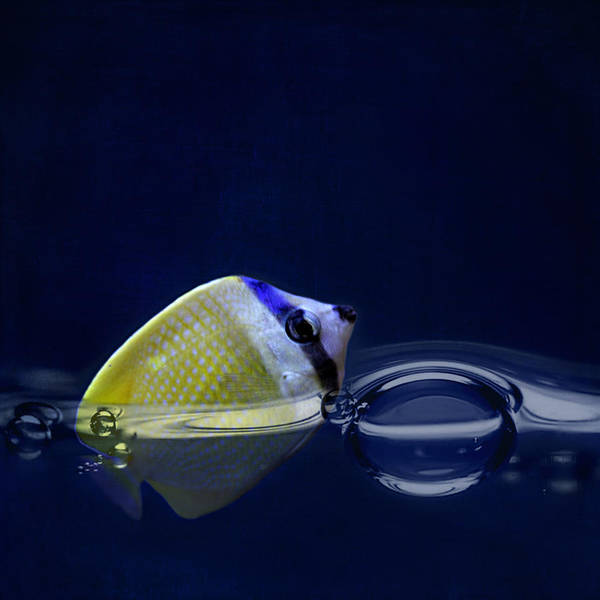 Ornamental Fish Photograph - The Fish by Heike Hultsch