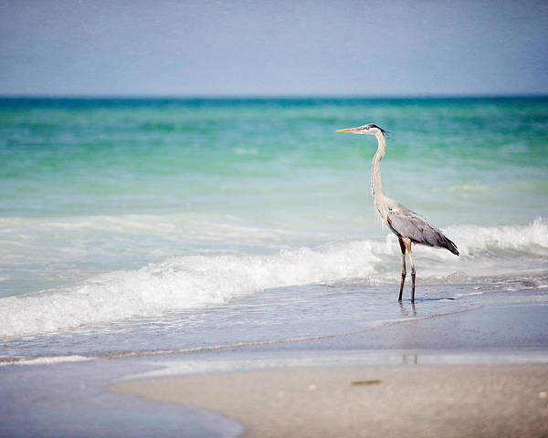 Lisa Russo Wall Art - Photograph - The Fishing Heron On The Beach At Longboat Key Florida by Lisa Russo