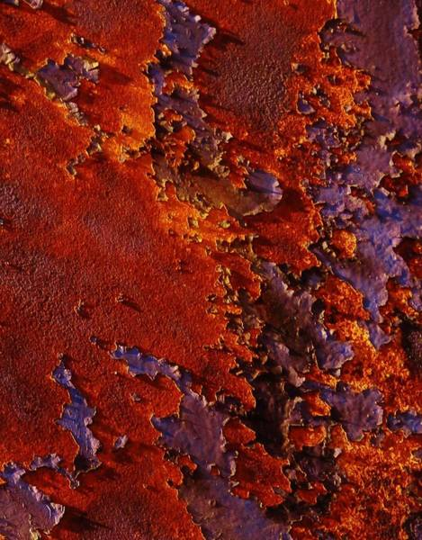 Photograph - The Flames Of Rust 29 by Charles Lucas