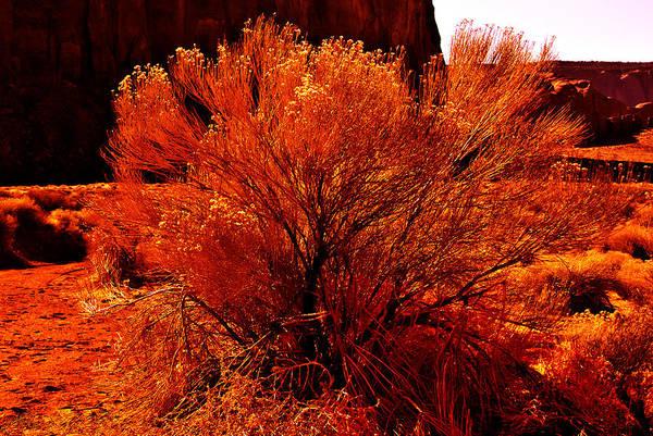 Photograph - The Flaming Bush by Bob and Nadine Johnston