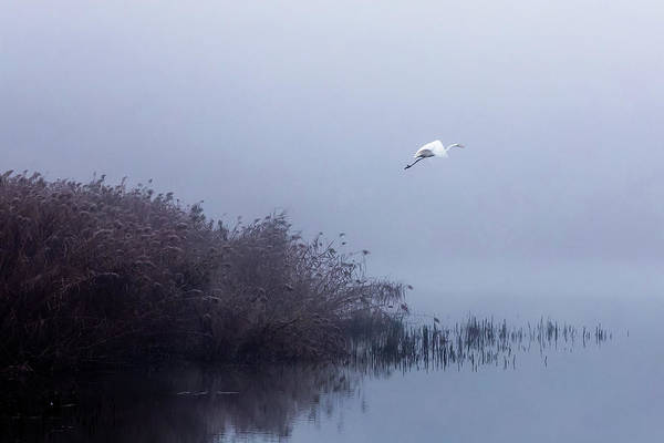 Pond Wall Art - Photograph - The Flight Of The Egret by Fran?ois Le Rolland