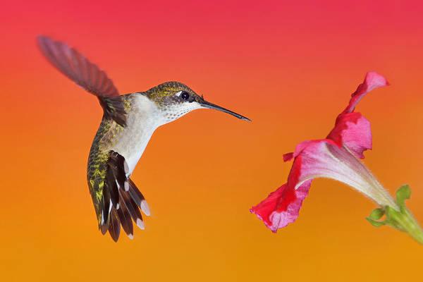 Photograph - The Flower Dance by Leda Robertson