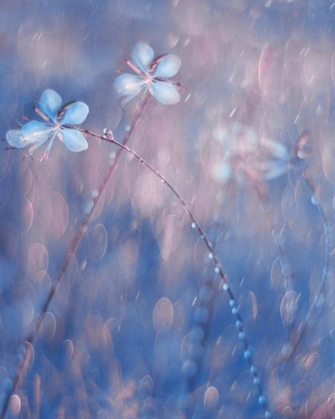 Soft Color Photograph - The Flower Duet by Delphine Devos