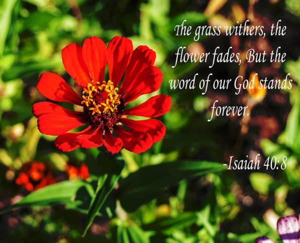 The Flower Fades Art Print