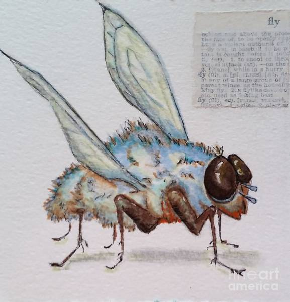 Drawing - The Fly by Vickie Scarlett-Fisher