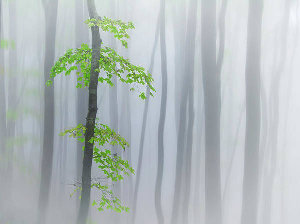 Trunks Photograph - The Fog And Leaves by Michel Manzoni