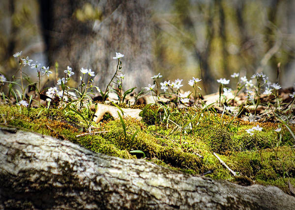 Photograph - The Forest Floor by Cricket Hackmann