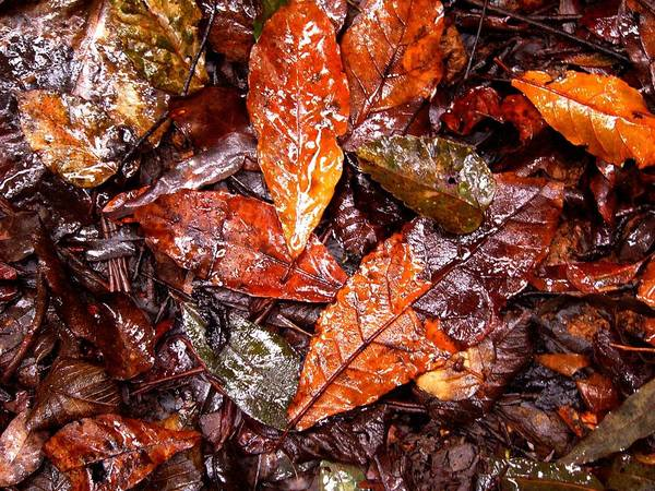 Photograph - The Forest Floor by David Rich